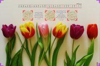 تقویم آذر ماه ۹۶